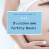 Ovulation and Fertility Basics