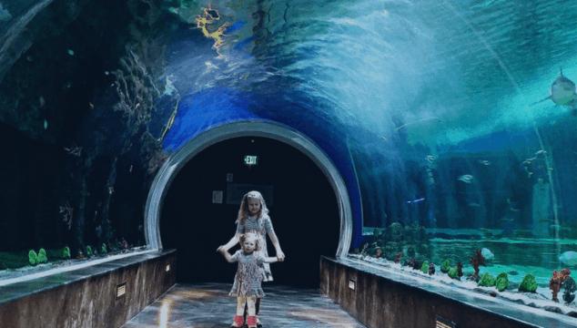 Family Tips for Visiting Loveland Living Planet Aquarium