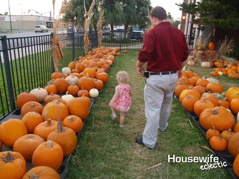 Fall Bucket List : Go to a Pumpkin Patch